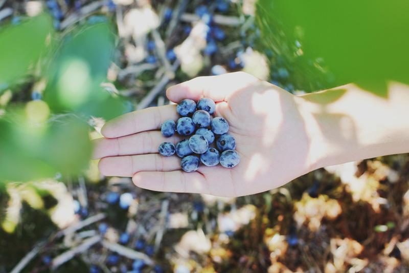 owoce w ogrodzie